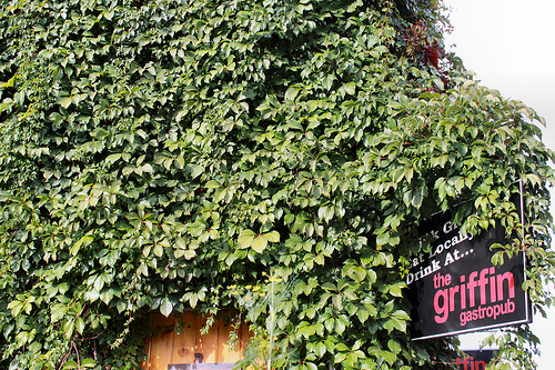The Griffin Gastropub in Bracebridge, Ontario